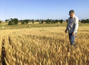Drought in High Plains the worst some farmers have ever seen