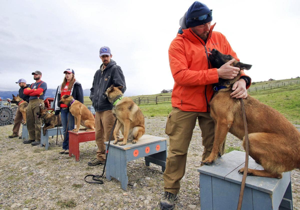 Livingston Couple Breeds Trains Guard Dogs For A Price