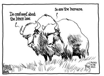 Bison bill confusion