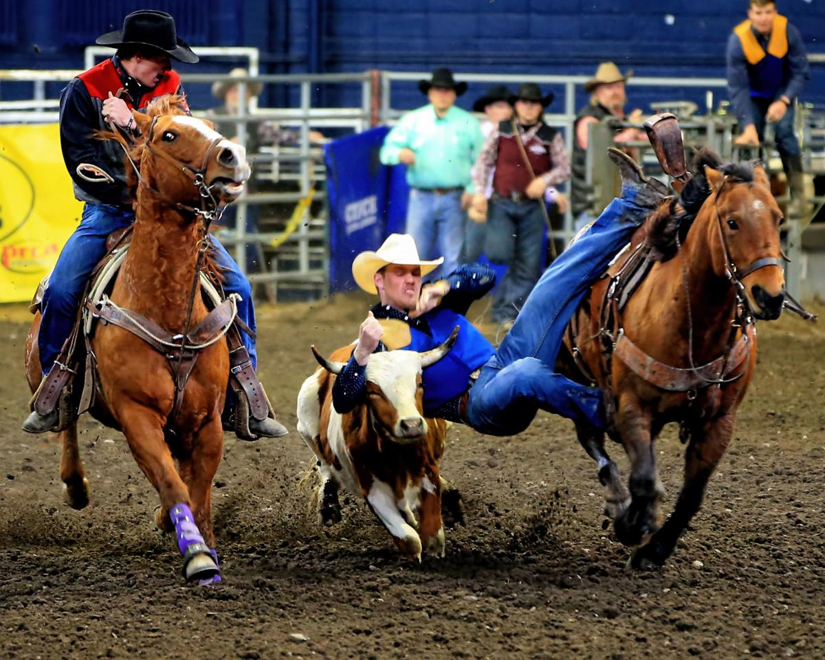 MSU Rodeo - Montana State's Powell