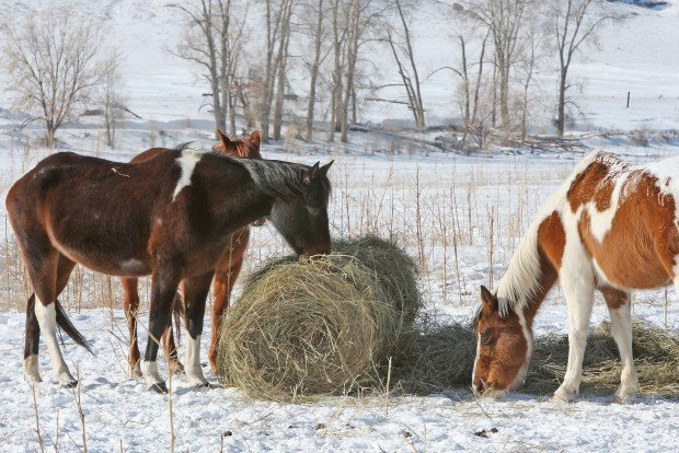 Carbon County Horses