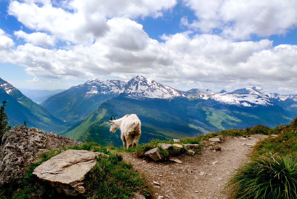 082015 mountain goat2 kw.jpg