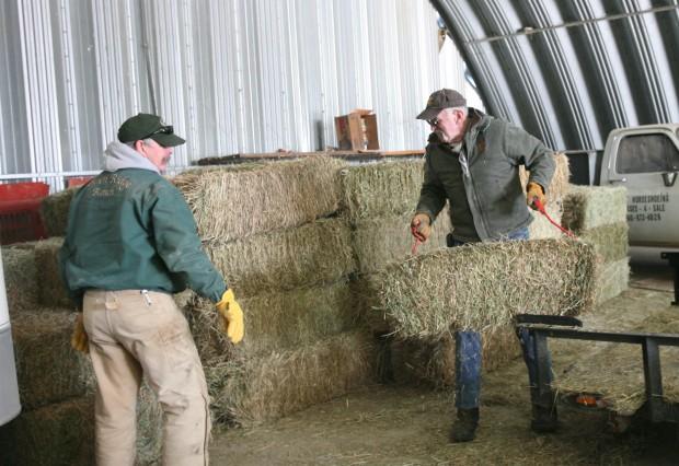 Volunteers unload 4 tons of hay
