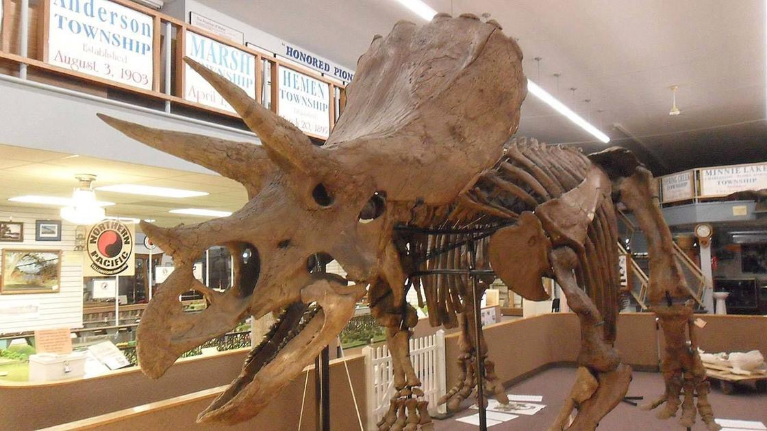 Famous North Dakota fossil Bob the Triceratops is back on the market