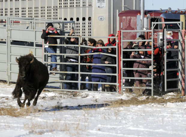 Bison quarantine