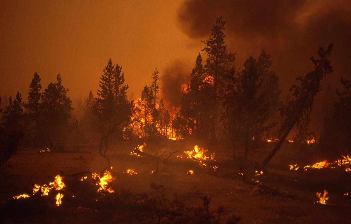 Ground fire at Norris Geyser Basin