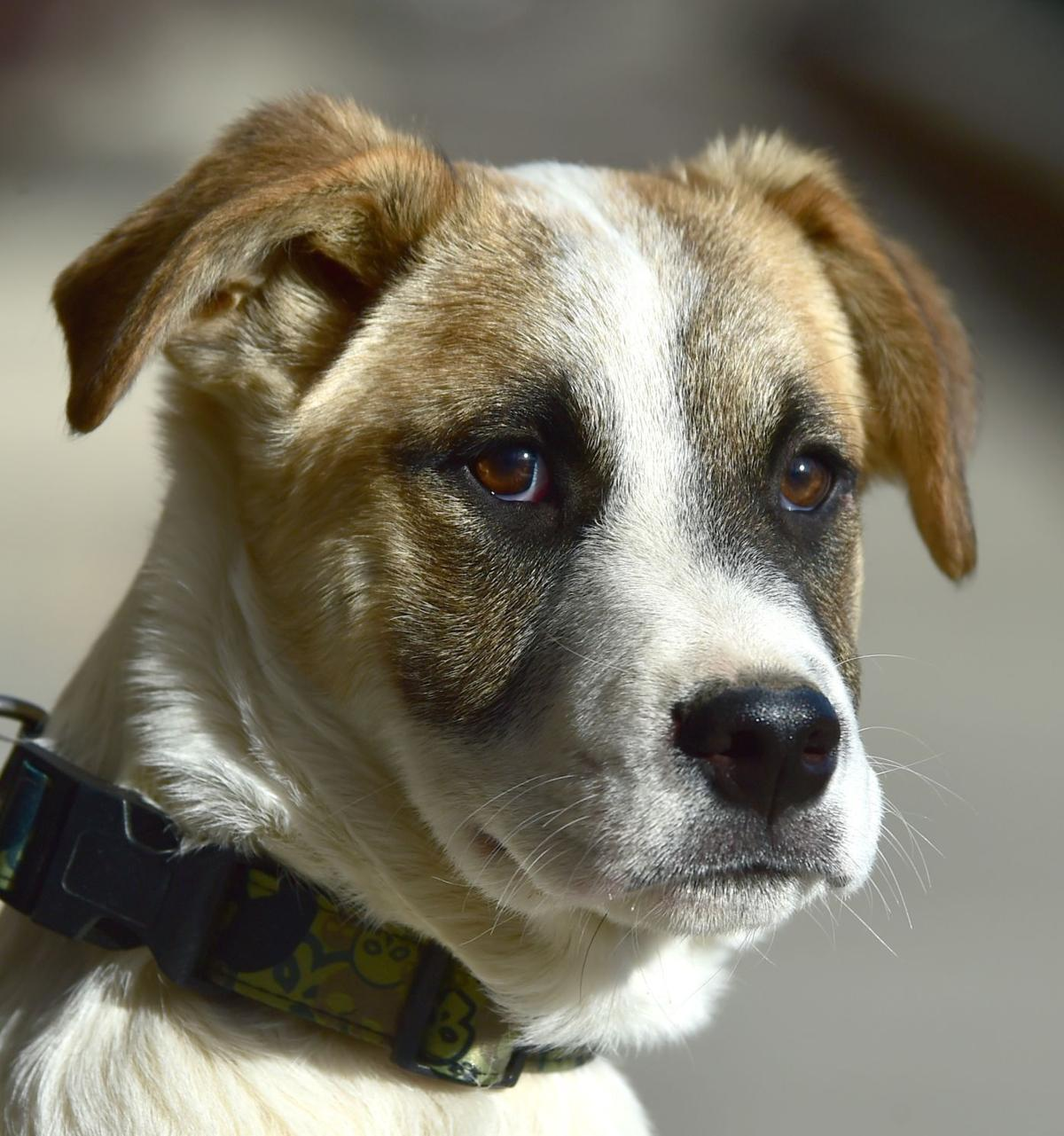 Pet of the Week: McGee