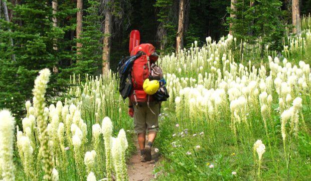 Beargrass path