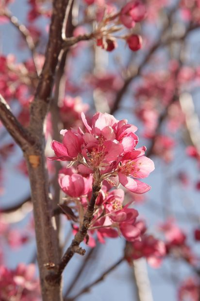 Early Planning Long Term Care Are Key To Fruit Trees