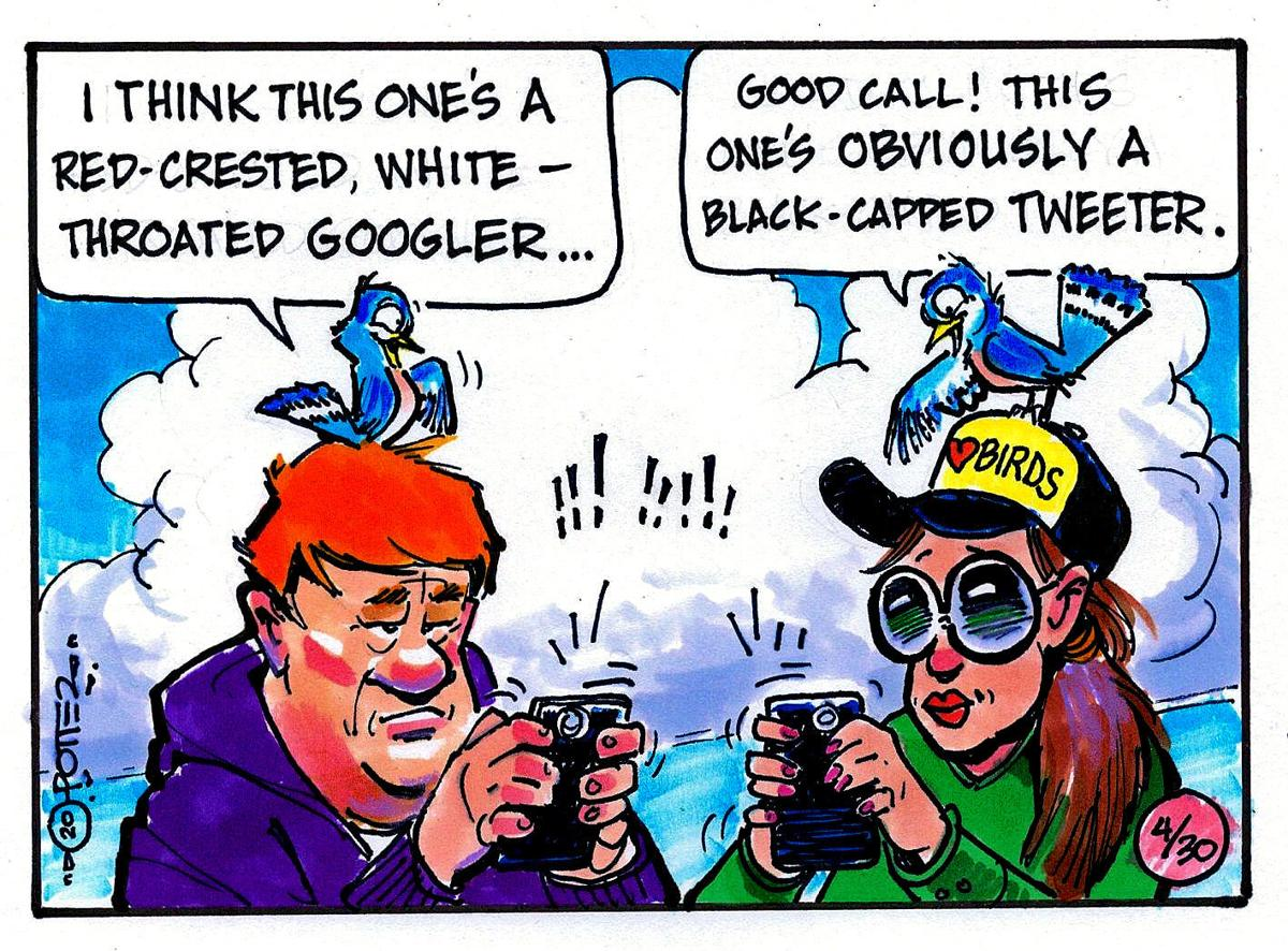 Bird Tweeters