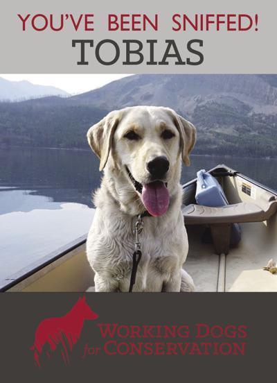 AIS dogs to visit Yellowstone, Grand Teton parks