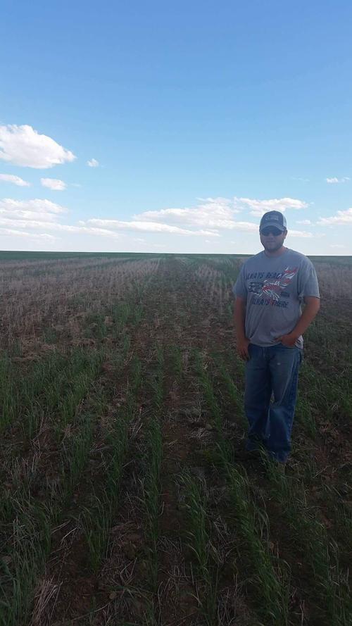 Drought stricken crops in Daniels County