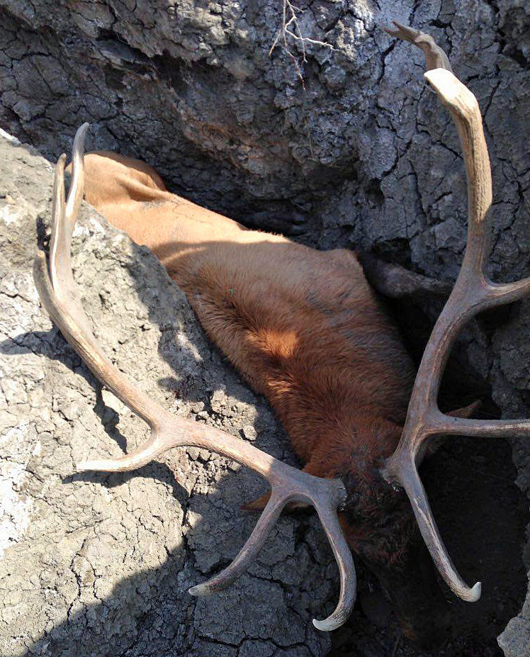 Elk trap
