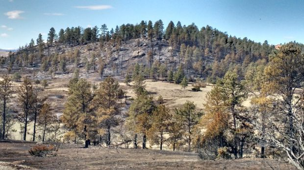 Trees burned in Pine Crest