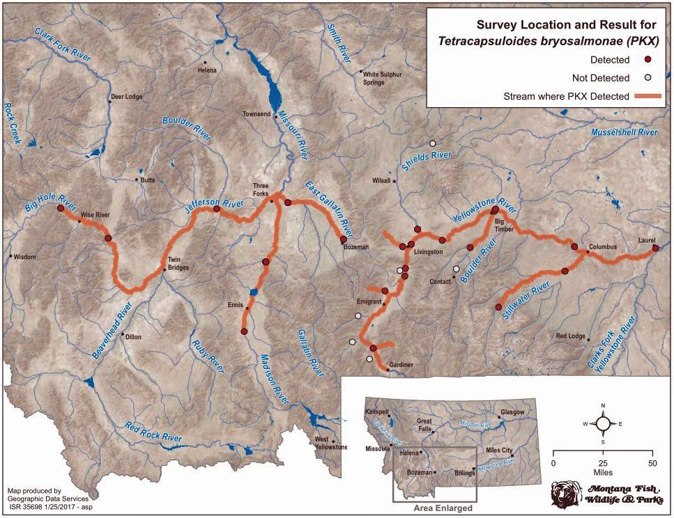 FWP Detects Fishkilling Parasite In Big Hole River Outdoors - Rivers of montana map