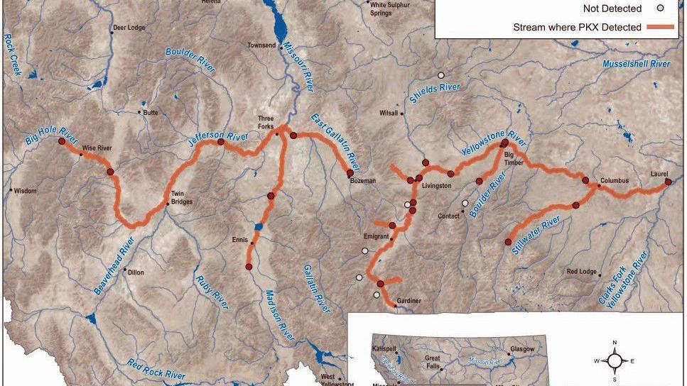 FWP detects fish-killing parasite in Big Hole River | Outdoors ... on platte river, ohio river, missouri river, marias river map, snake river map, st. croix river map, yellowstone national park, gallatin river map, platte river map, columbia river map, san joaquin river map, illinois river, bighorn river map, yellowstone caldera, montana map, colorado river map, minnesota river map, grand prismatic spring, red river, hudson river map, great salt lake map, snake river, arkansas river, osage river map, mississippi river map, glacier national park, great falls, arkansas river map, wabash river, grand canyon of the yellowstone, bitterroot mountains map, penobscot river map, tennessee river map, tennessee river, old faithful geyser, green river, cascade range map,