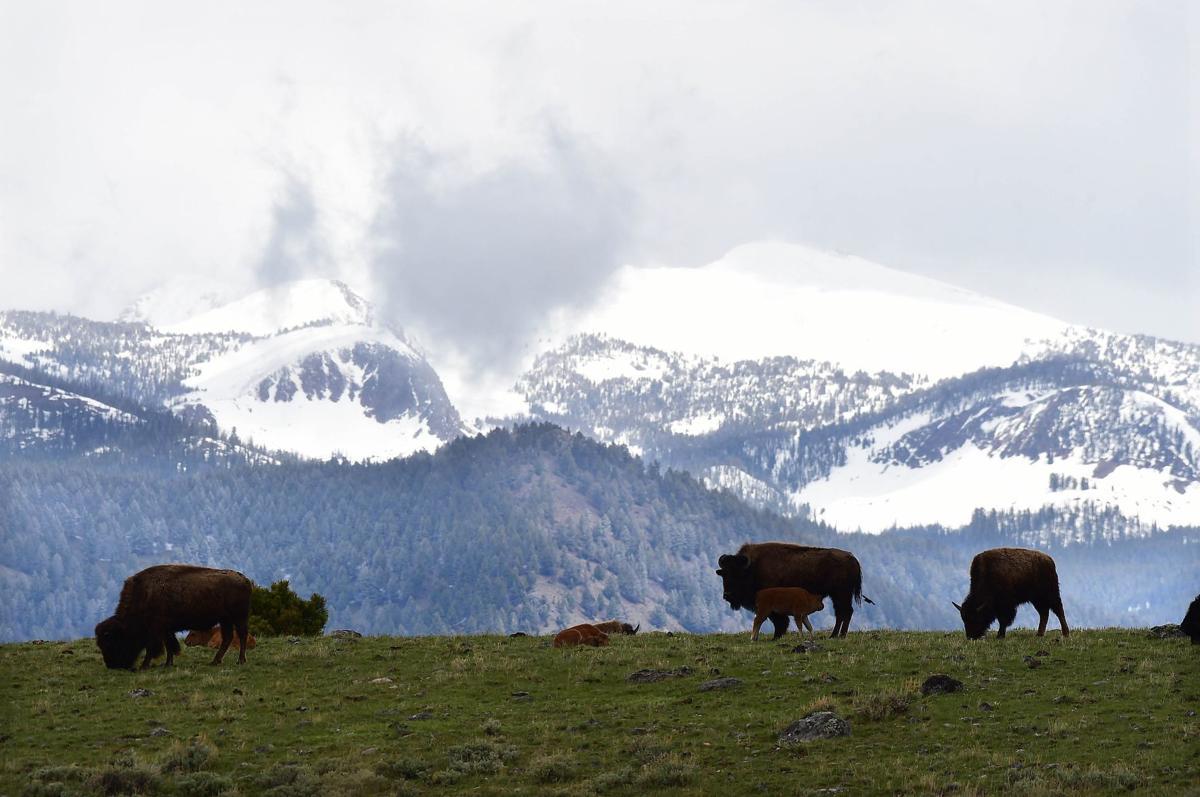Bison hill