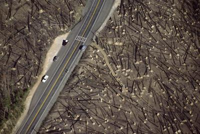 1988 Yellowstone fires burned a lot of land, but also brought intense scrutiny