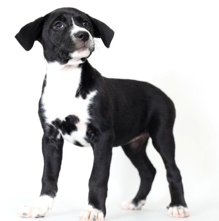 Pet of the week: Teri