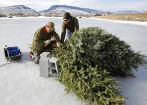 Christmas tree recycling program to provide fish habitat