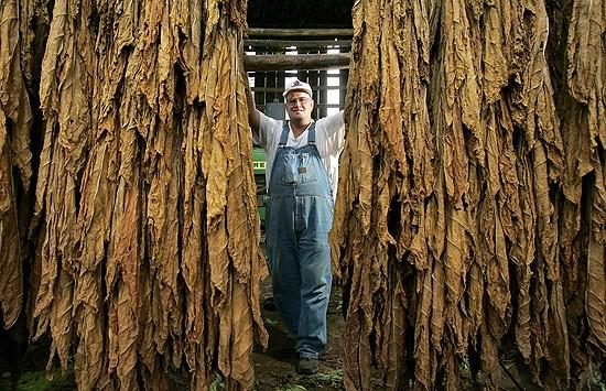 For some Wisconsin farmers, burley tobacco nothing to spit at