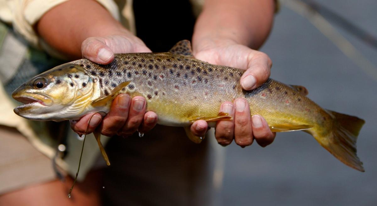 Michele DeGroat holds a brown trout