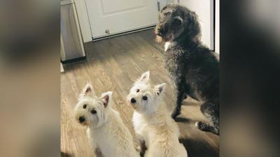 Abby, Izzy and Harpo
