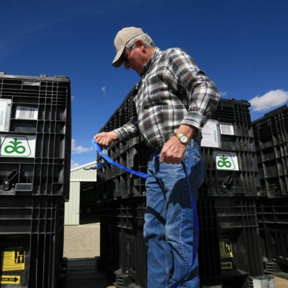 Once a Montana anomaly, corn takes root | Montana News