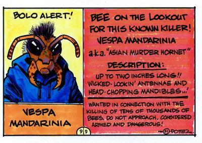 Wanted: Asian murder hornet