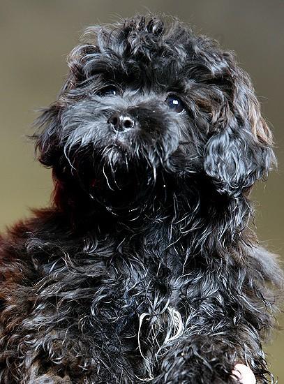 Pet of the week | Lifestyles | billingsgazette com