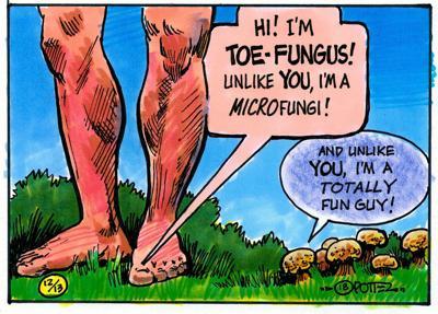 Fungus vs. fun guy