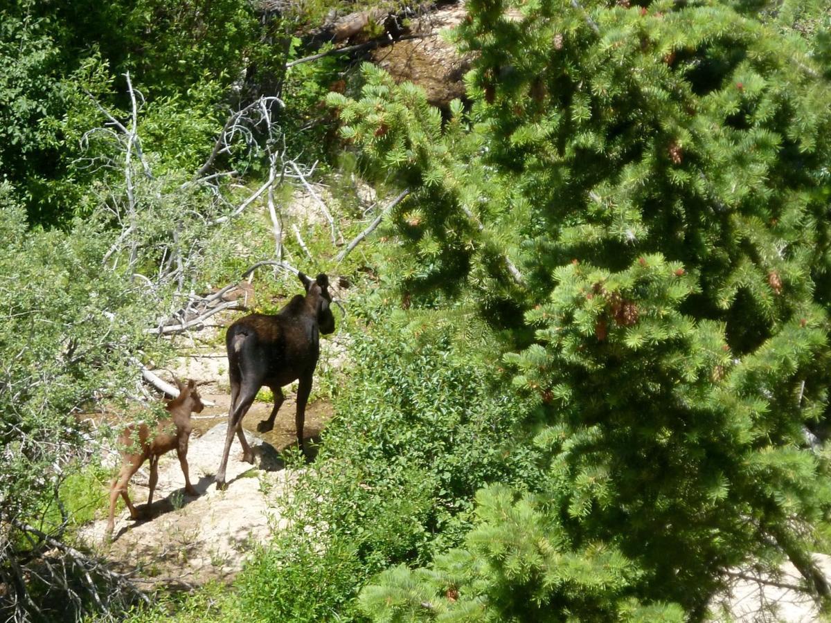 Fox-Palisades Trail