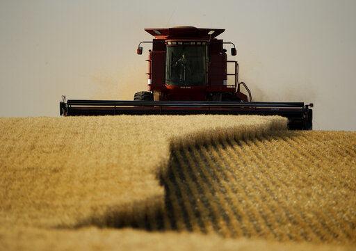 Details emerge in Washington GMO wheat investigation