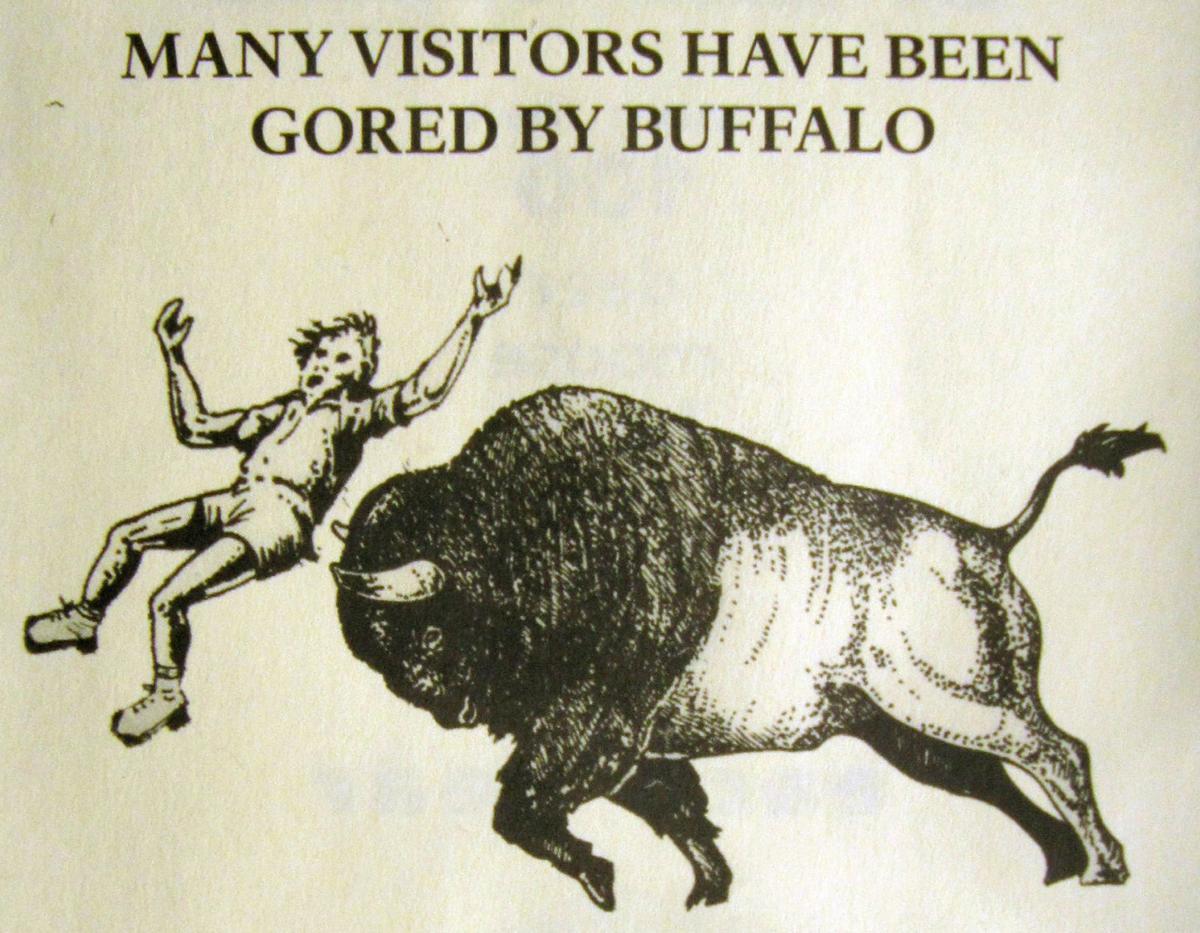 Yellowstone Dangerous Wildlife