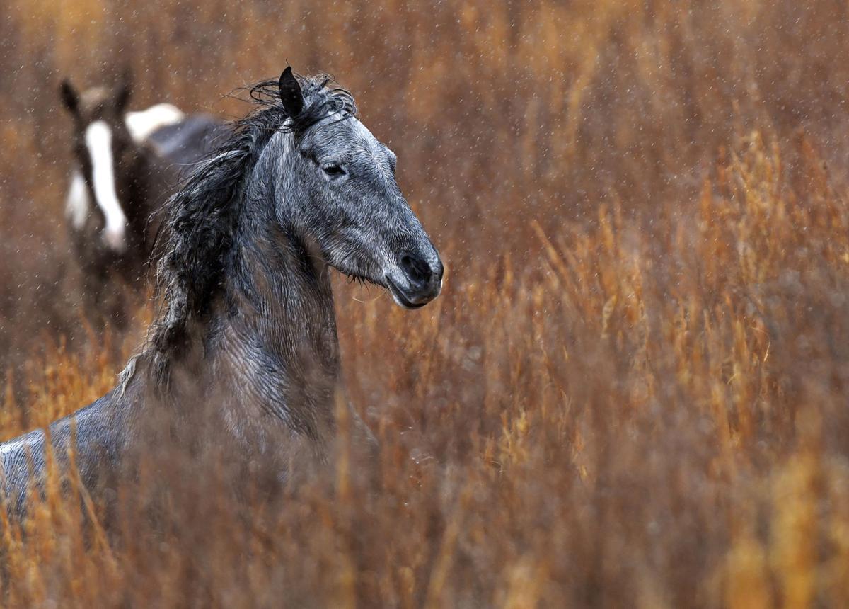 Photos: The wild horses of Breathitt County | National