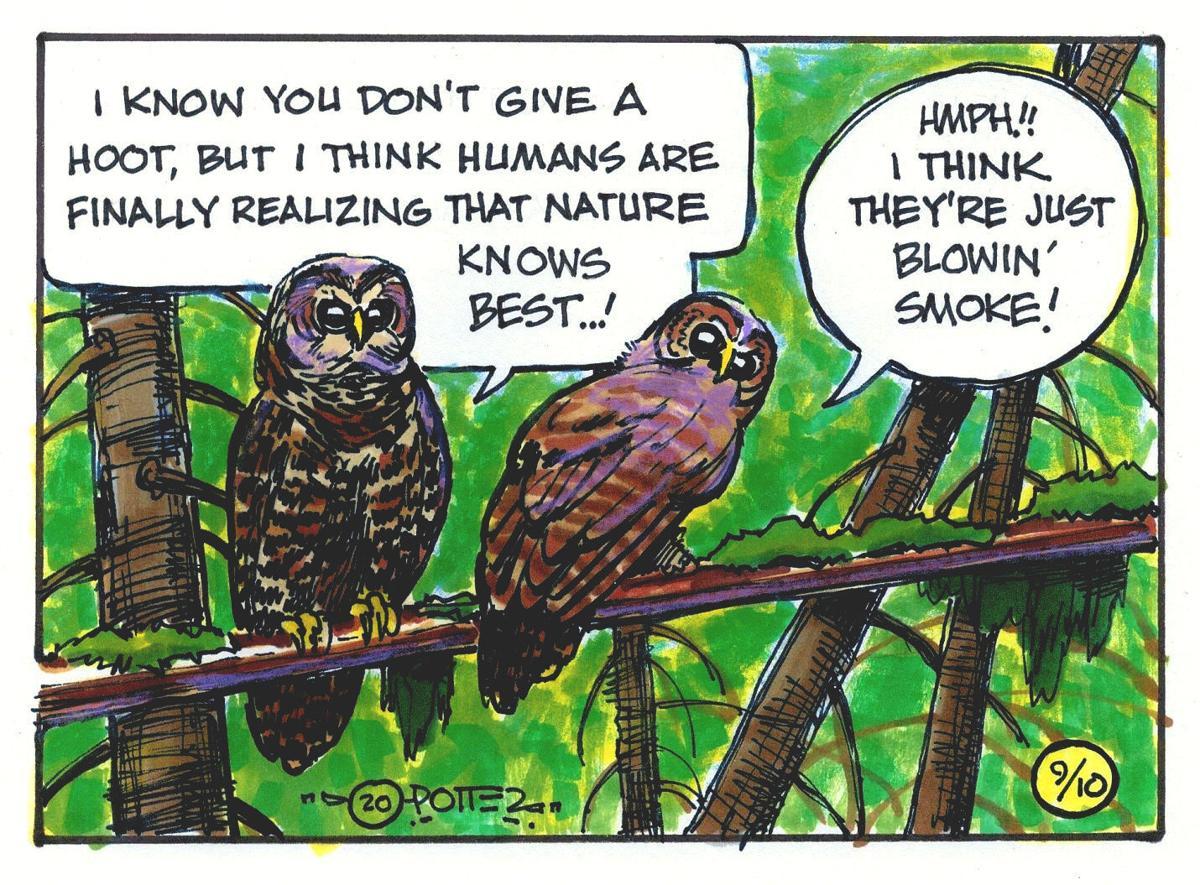 Owl puns