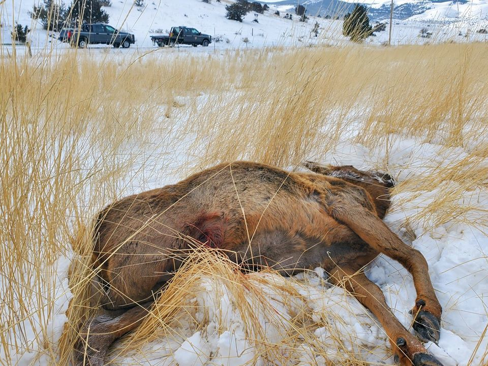 Park County poaching