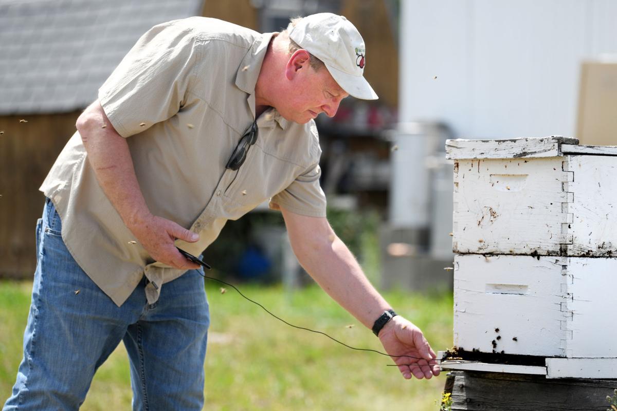 071219 bees-1-tm.jpg