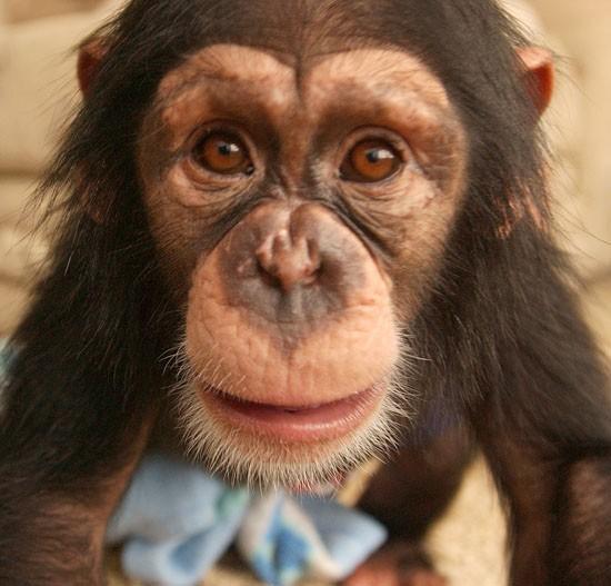 Roberts chimp in quarantine after report of biting