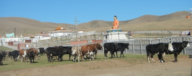 Cows and shrines