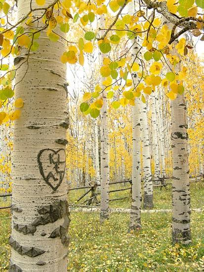 Cooperation on aspen conservation