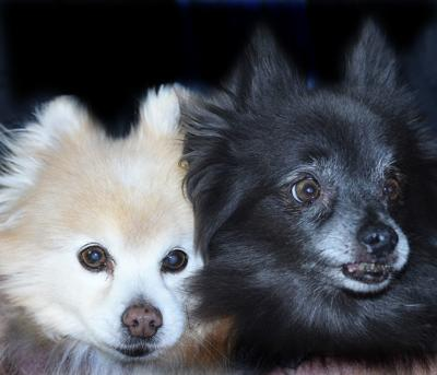 Pets of the week: Fritz and Bell