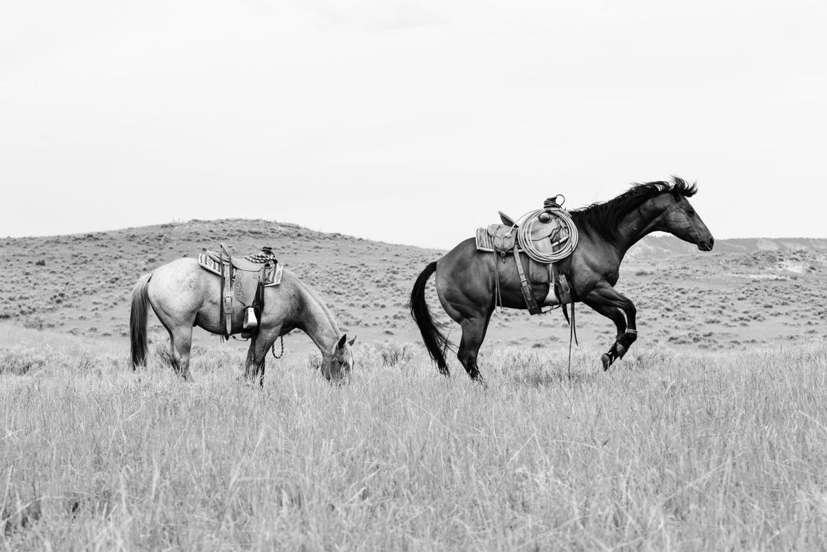 Alexis Bonogofsky photographs — two horses