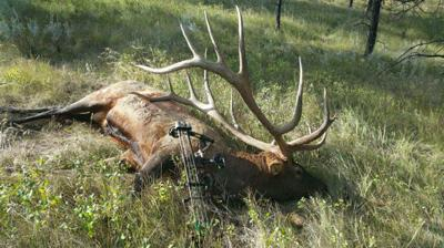 Montana archer may have shot new world record elk | Outdoors