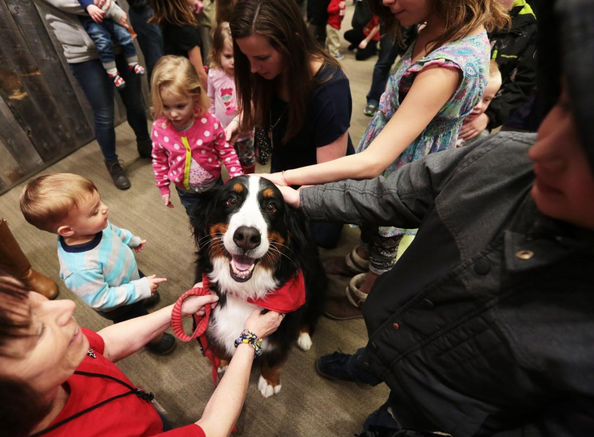 Intermountain Therapy Dogs newest member China Berry