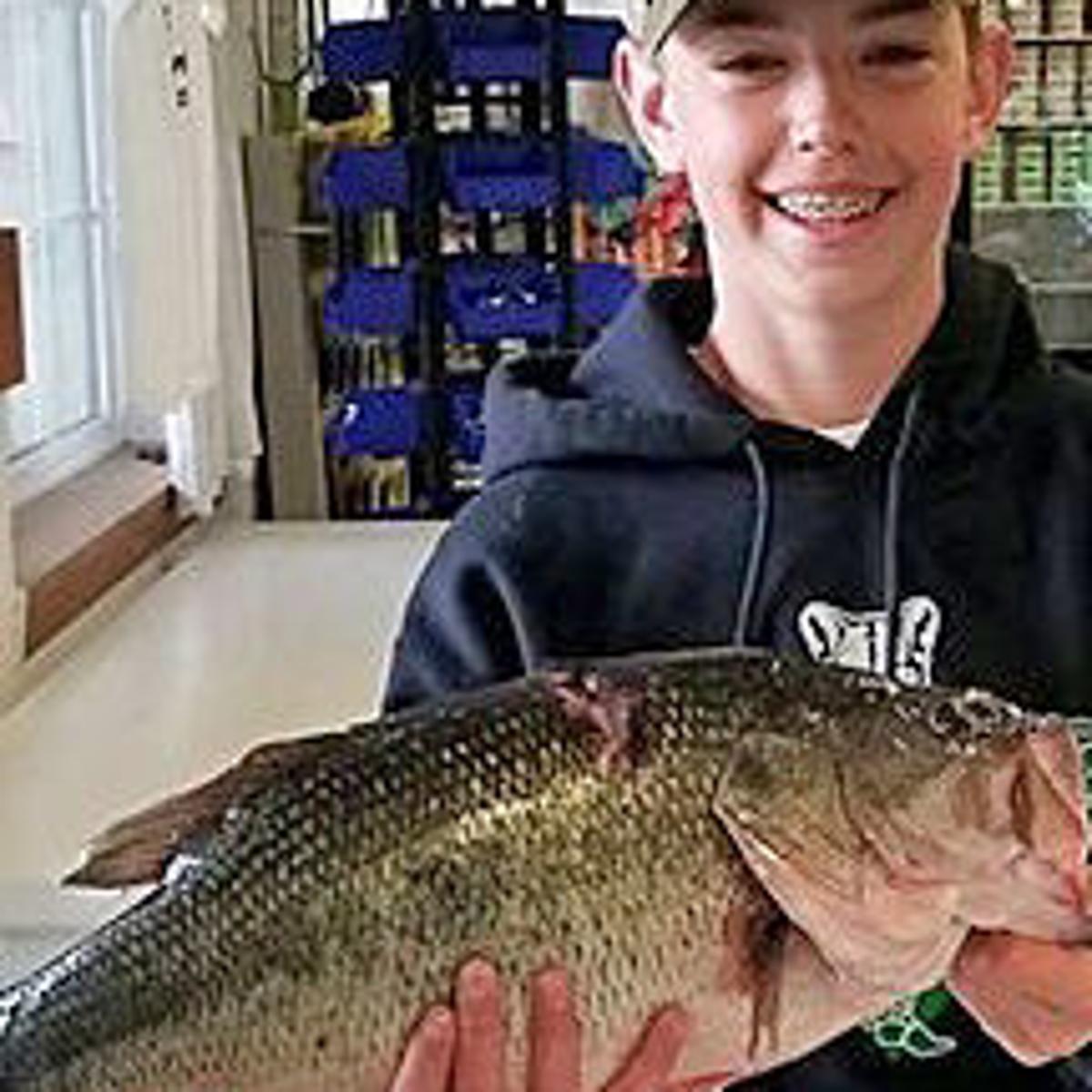 Montana fishing report: Rainbows cruising shorelines