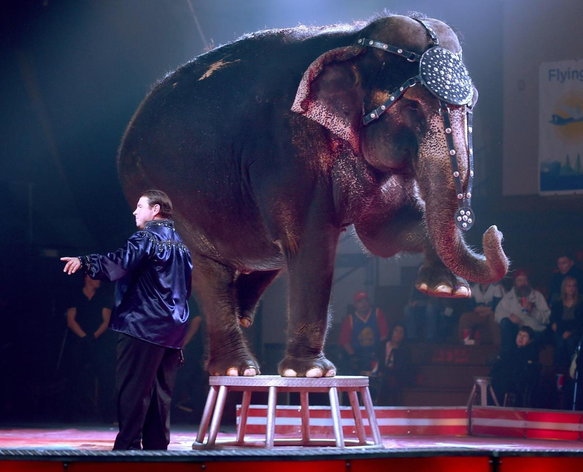 An elephant performs