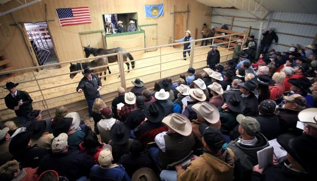 Buyers crowd into the sale barn