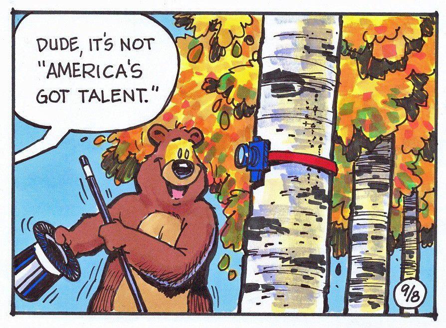 Will bear cams help bears?