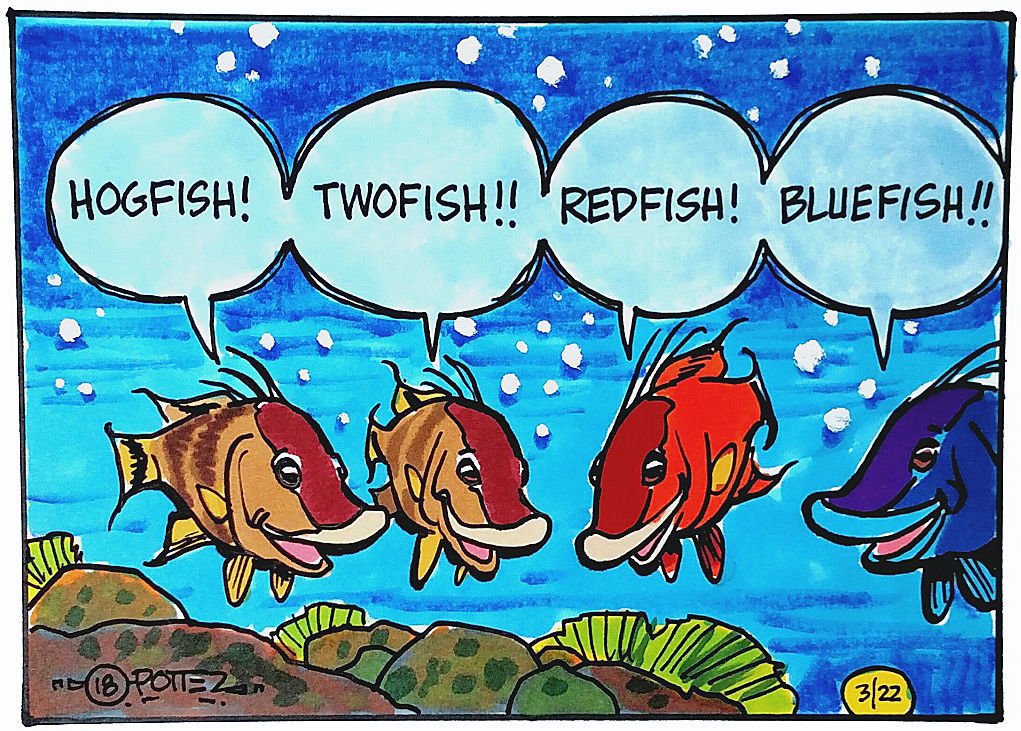 Hogfish changes color